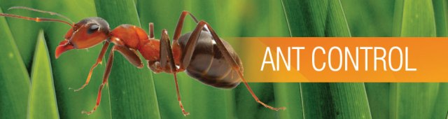 ant-pest-control-sevice